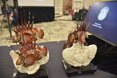 Lionfish Champion Awards (MyFWC Florida Fish and Wildlife) Tags: fish marinefisheriesmanagement invasivespeciesmanagement lionfishchallenge lionfishchampions nonnative floridafishandwildlifeconservationcommission fwc florida panamacity commissionmeeting