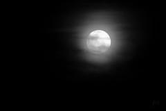 (Prajna Nairobi) Tags: moon night fullmoon blackandwhite bw nairobi
