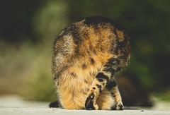 Cat Yoga (VintageLensLover) Tags: yoga katzen cats strasenkatzen mallorca balearen dof schärfentiefe schärfeverlauf bokeh bokehlicious