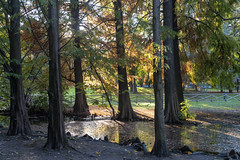 Milan, the Sempione park in November (clodio61) Tags: europe italy lombardy milan november parcosempione autumn city color day fall foliage leaves nature outdoor park photography plant pond tree urban yellow
