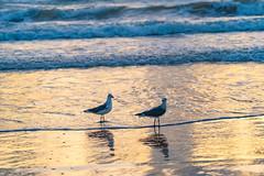 SouthPadreIsland_413 (allen ramlow) Tags: south padre island texas tx sunrise beach cloud water sand gulf coast sony alpha
