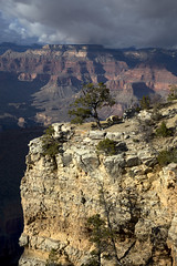 Colorful contrasts (BDFri2012) Tags: grandcanyonnationalpark grandcanyon arizona desertsouthwest southwestunitedstates americansouthwest landscape nationalpark trees canyon clouds cloudy colorful