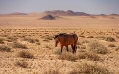 entspannt (richter-f) Tags: 2019 afrika namibia2019 reise wüste