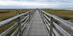 A long walk (judmac1) Tags: walk boardwalk fence estuary marshes