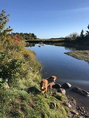 TrishaPerry_PuppyParadise_Oct2018 (CabotShores) Tags: pet dog fall guestphoto water