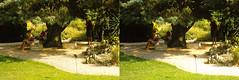 Jardin des Plantes stéréo plein format 18 (Dominik Lange) Tags: stereoscopy stereophotography stereoscopic stereography stereorig stereo3d jardindesplantes poetry parkcity paris publicspace nature underground urbannature urbanspace outdoor outside