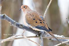 1S0A3449 (nitinpatel2) Tags: bird nature nitinpatel