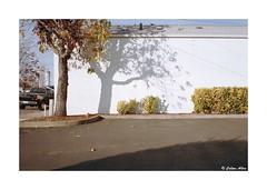 (Daiku_San) Tags: film ishootfilm 35mmfilm colorfilm rangefindercamera expiredfilm usetheforce leicam2 canonltm352 ferraniasolaris200 epsonv750mpro