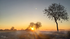 a misty december sunrise (Wilma van Oorschot) Tags: wilmavanoorschot angelphotography iphone6plus mist fog cyclists trees sunrise sunbeams morning december nature outdoor