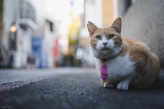 猫 (fumi*23) Tags: 35mm sony emount ilce7rm3 sel35f18f street animal cat alley feline chat dof bokeh depthoffield gato bok neko katze 猫 ねこ a7r3 fe35mmf18 街 路地 ソニー