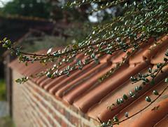 Autumn Walk (Spotmatix) Tags: 35mm belgium brabantwallon camera countryside evolte400 effects fall incourt landscape leaves lens monochrome nature olympus places primes seasons trees