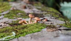 Mushroom (Fedroff) Tags: nature russia sony mushroom fungus moss