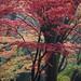 Autumn colors finally reach Kawasaki