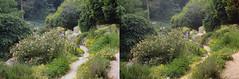 Jardin des Plantes stéréo plein format 14 (Dominik Lange) Tags: stereoscopy stereophotography stereoscopic stereography stereorig stereo3d jardindesplantes poetry parkcity paris publicspace nature underground urbannature urbanspace outdoor outside