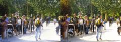 Jardin des Plantes stéréo plein format 1 (Dominik Lange) Tags: stereoscopy stereophotography stereoscopic stereography stereorig stereo3d jardindesplantes poetry parkcity paris publicspace nature underground urbannature urbanspace outdoor outside