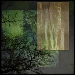 Organic Dream (r0llsky) Tags: organic reflection surimpression rheinforest green greenmelody