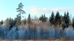 Frost (Anna's 50) Tags: winter canong1x