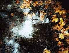 Golden leaves (PattyK.) Tags: snapseed ioannina giannena giannina epirus ipiros balkas hellas ellada greece grecia griehcneland whereilive autumn φθινόπωρο ιωάννινα γιάννενα ήπειροσ ελλάδα βαλκάνια βροχή καιρόσ φύλλα νερό rain rainyday weather leaves goldenleaves raindrops november 2019 huaweip9