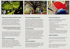 "The Forest Bathing Institute Information Leaflet (December 2019 Edition) (Page 2 of 2) (Kam Hong Leung 07) Tags: ""beatriceleung"" ""kamhongleung"" ""leungkamhong"" 'theforestbathinginstitute' tfbi 'forestbathing' 'garyevans' 'olgaterebenina' 'susannemeis' 'rosannaamadeo' tfbinstitute 'foresttherapy' 'holistichealingtherapy' 'shinrinyoku' 'nipponmedicalschool' 'drqingli' 'professorsuzannesimard' 'woodwideweb' 'newlandscorner' 'surreywildlifetrust' guildford surrey 'surreycountycouncil' 'yewtree' 'oaktree' fungi mushroom wood woodland tree flora fauna wildlife park parkland 'greenspace' conservation ecology environment nature plant 'naturalneighbourhood' network autumn 'surreyhills'"