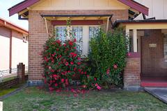 Orange (Erich Schieber) Tags: architecture flower suburbia australia botany orange window