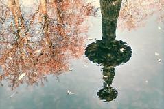 everywhen (Renate R) Tags: pfaueninsel brunnen fontäne insel spiegelung peacockisland fountain reflection water wasser trees leaves exoticimage