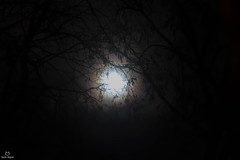 Last Full Moon of 2019 (samward1507) Tags: moon full lunar night canon canon200d 50mm nifty50