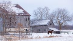 Down On The Farm (maureen.elliott) Tags: happyfencefriday hff fences farm barns horse animal rural fields homestead ontario