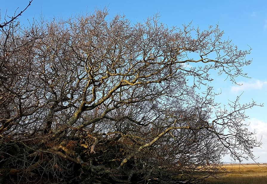 Tree branches on west side of Pagham Harbour 2