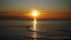 LAkeshore Sunrise by   Frank Peluso (photofranco2007) Tags: etobicokeparks park lakeshoresunrise canada scenic sonya7rminolta2885beercanlens