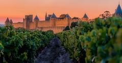 Carcassonne 19-101 (snellerphoto) Tags: aude carcassonne citédecarcassonne france occitan pinot southwestfrance sunset unesco occitanie pinotnoir vine vineyard toulouse occitane