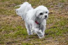 20191212-DSC01875-Edit.jpg (Jack Winter) Tags: dog dogpark park