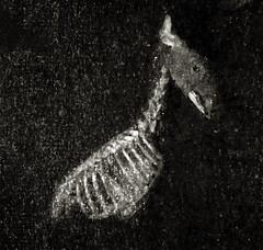 Bones (efo) Tags: bw expiredfilm dynapan holga skeleton deer film