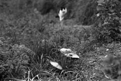 191212 (enricospinozzi) Tags: sbt funghi gatto heliar film analog enricospinozzi