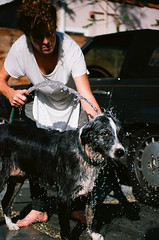 000034580029 (danteandcake) Tags: leicaflex film 35mm australian shepherd aussie mercedes bath