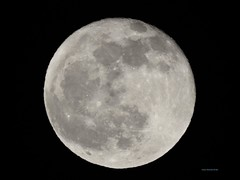 Full Moon December 2019 (Anton Shomali - Thank you for over 3 million views) Tags: nature 2019 219 storm moon super hunger snow bright large night round february big sky nikon coolpix p900 beaver full november cold fullcoldmoon coldmoon december december2019 decade longnightsmoon longnights long nights gemini darksky