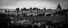 Carcassonne 19-102 (snellerphoto) Tags: aude carcassonne citédecarcassonne france occitan southwestfrance sunset unesco occitanie vineyard toulouse occitane