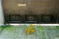 000039180032-1 (alexdotbarber) Tags: 145 c41 contax contax45mmf2carlzeissplanart contaxg2 cuernavaca mexico morelos ocotepec analog autofocus cartas cempasuchitl colornegative f8 film filmphotography gate mailslot marigold moon petals sun
