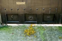 000039180032-2 (alexdotbarber) Tags: 145 c41 contax contax45mmf2carlzeissplanart contaxg2 cuernavaca mexico morelos ocotepec analog autofocus cartas cempasuchitl colornegative f8 film filmphotography gate mailslot marigold moon petals sun