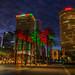 Christmas Palms and Tampa Skyline