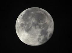 Morgenmond-13-12-19 (4) (thobern1) Tags: mond moon luna lune dezember december