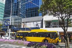 Lambton Quay - Wellington (andrewsurgenor) Tags: trolleybuses trolleybus transit trackless trolleycoach trolebús trolejbusowy trolleybuswellington trolejbus trolle obus filobus gowellington nzbus