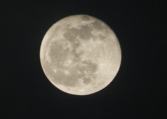 PC122214aacrop (Pussreboots) Tags: moon fullmoon 2019