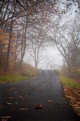 Foggy Path (Joe_R) Tags: landscape lakeelkhorn columbia fog tree path nature fall autumn