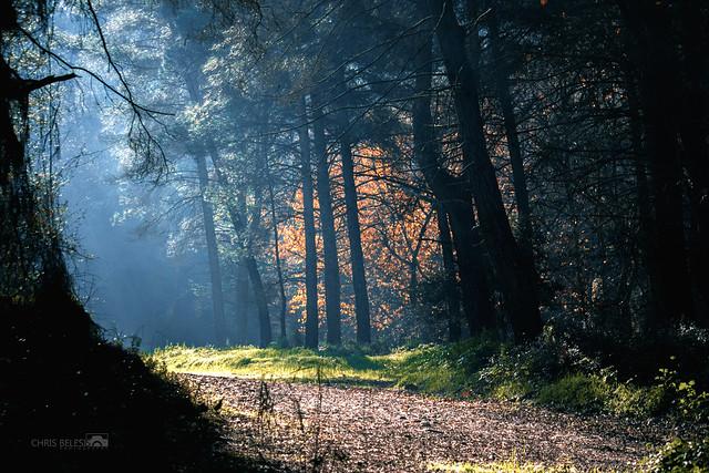 1Περπατώντας στο δάσος Πάφου