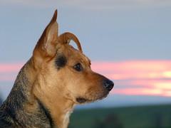 Starfoto gibts natürlich auch in Farbe (isajachevalier) Tags: hund dog tier haustier mischling porträt panasonicdmcfz150