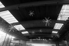 holiday train show 2019, 12/12/19 (hollow sidewalks) Tags: nyc newyorkcity bronx nybg newyorkbotanicalgarden holidaytrainshow plants plant holidays botanicalgardens modeltrains hollowsidewalks holidays2019 holidays19