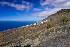 Vineyards (PLawston) Tags: la palma spain canary islands fuencaliente volcanoes