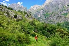Juracao (picos de europa,) Tags: juracao caín paseo senderismo nature green outside naturaleza mountains valdeón