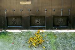 000039180032-3 (alexdotbarber) Tags: 145 c41 contax contax45mmf2carlzeissplanart contaxg2 cuernavaca mexico morelos ocotepec analog autofocus cartas cempasuchitl colornegative f8 film filmphotography gate mailslot marigold moon petals sun