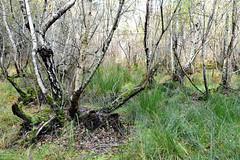Il a tant plu ... (Ciceruacchio) Tags: pluie rain pioggia sergeutgéroyo forêt forest foresta nouvelleaquitaine france francia frankreich nikond750